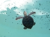 Cute baby turtles at Xcaret...