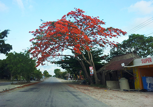 The road in Playa del Carmen