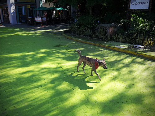 Yellow brick road - Condo Hotels Playa del Carmen