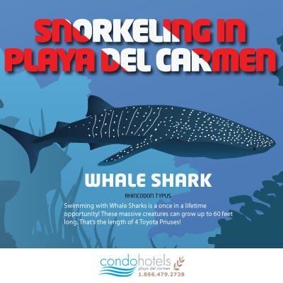 Snorkeling in Playa del Carmen Infographic Thumbnail - Condo Hotels Playa del Carmen