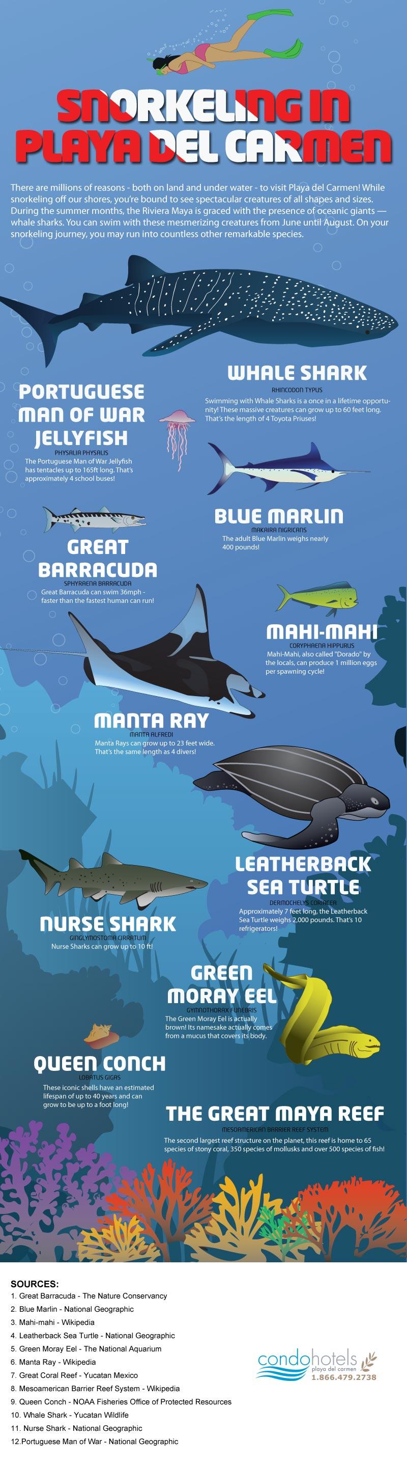 Snorkeling in Playa del Carmen Infographic - Condo Hotels Playa del Carmen