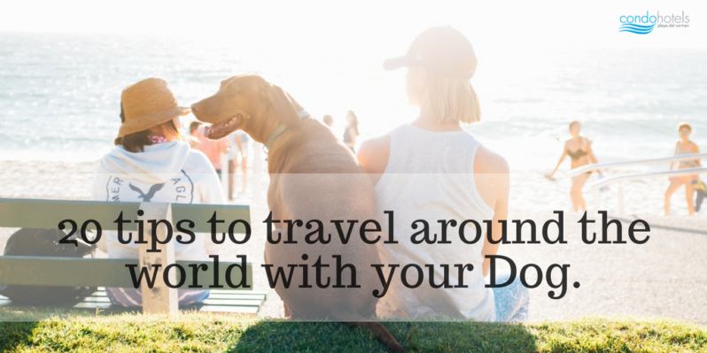 20 Tips to Travel Around the World with your Dog.